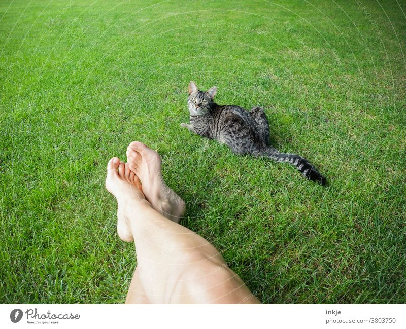 green meadow with pale legs and tigered cat Colour photo Exterior shot Meadow Lawn Garden Cat Pet Legs Women's legs Lie Summer warm Goof off lie break free time