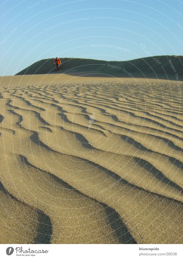 sand dunes pattern Pattern Grainy Waves Sand Beach dune Desert Structures and shapes Sky Blue grain of sand