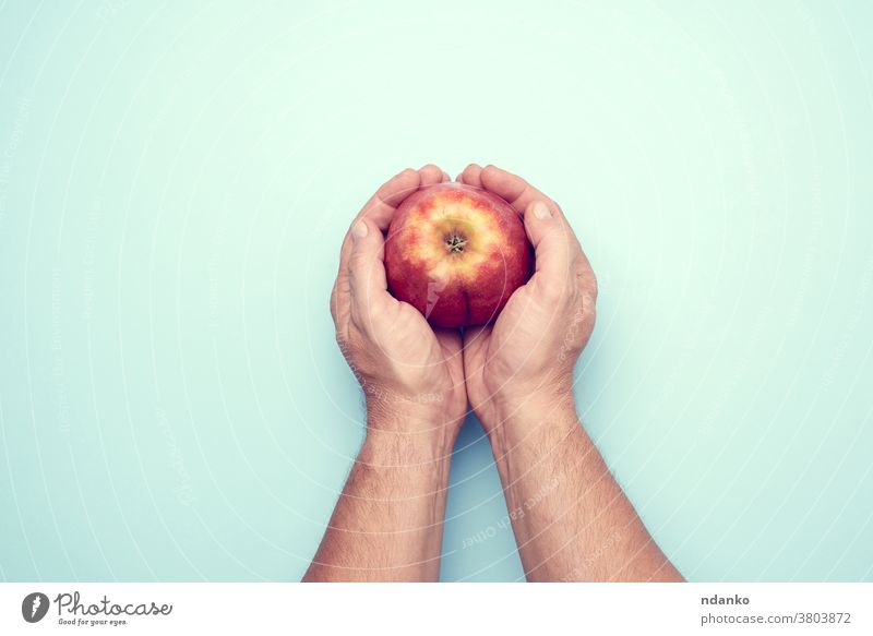 two male hands hold a ripe red apple on a blue background fruit fresh healthy food organic juicy diet man human nature sweet holding nutrition arm vegetarian