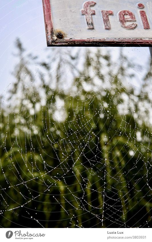 A cobweb full of tiny dewdrops, picturesquely attached to a rusty shield Spider Spider's web Ripening drops dew drops silver Delicate Net Close-up