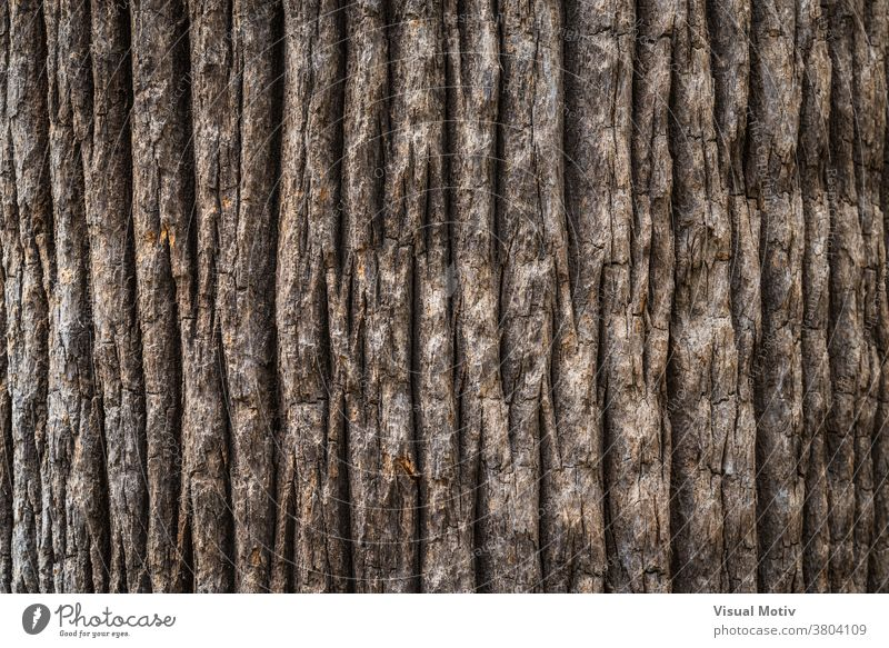 Bark texture of the wide trunk of a California fan palm tree bark rough background surface flora old nature wood aged botany brown abstract close-up tropical