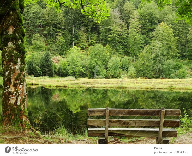 At the pond (2) Loneliness tranquillity Bench Surface of water Reflection in the water Edge of the forest silent Black Forest Nature reserve Recreation area