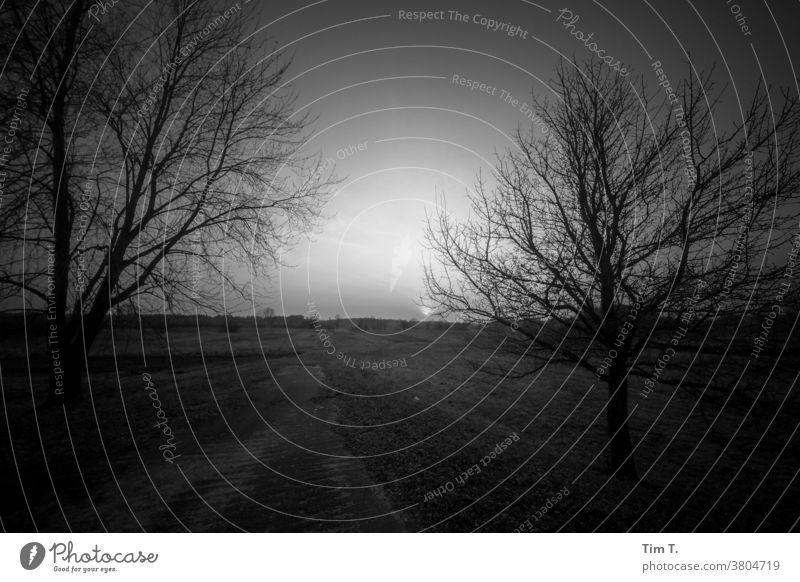 Evening mood in Ukraine B/W Loneliness Calm Black & white photo B&W Dark Landscape - Nature Light Tree Dusk Sunlight Chernobyl
