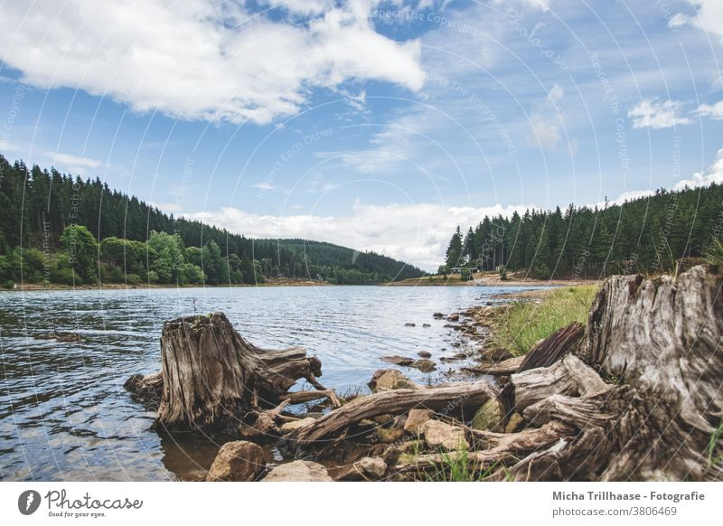 Lütsche Dam / Thuringia Thueringer Wald Lake Forest Water Root Stone Landscape Nature Hiking Camping Vacation & Travel Sky Clouds Tree Relaxation naturally