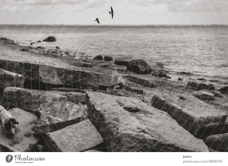 On the beach lie broken concrete slabs and the swallows fly in the air Ocean Baltic Sea Baltic coast Stone Concrete stones Water steep coast Beach rock Boulders
