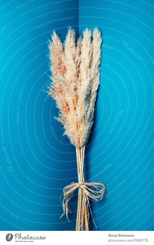 Dried Pampas Grass Pampam Grass Props Reed stem dried flowers floral arrangement bouquet plant design natural nature decoration white blossom style nobody