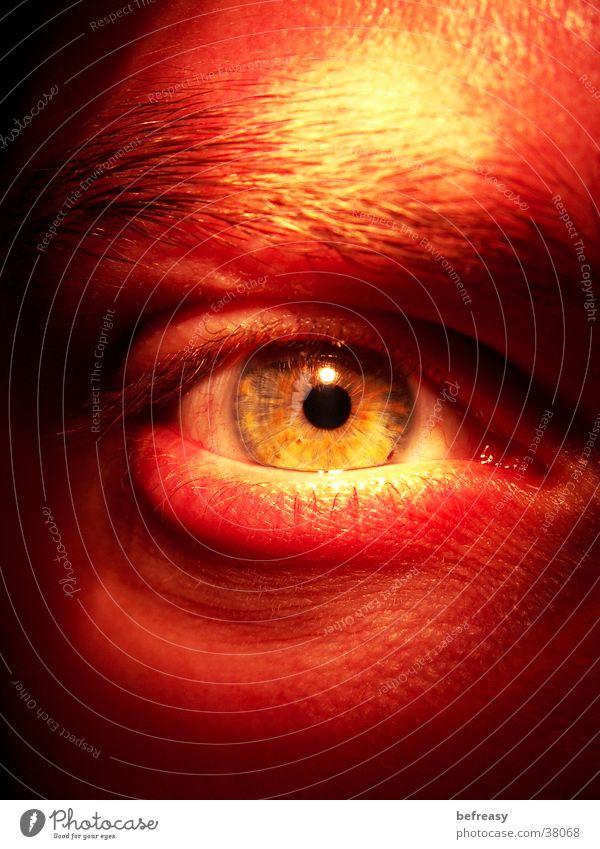 Man Eyes Anger Eyelash Aggression Eyebrow Pupil Iris Tear open Tiny hair Pervasive