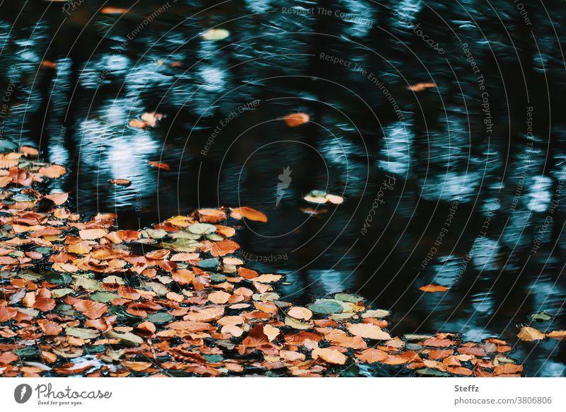 Autumn in our lives again Sense of Autumn autumn mood Autumnal colours Autumnal landscape Autumnal weather Autumn leaves autumn atmosphere autumn light