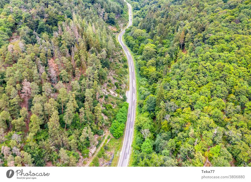 a forest street from far above trees transportation empty concrete mixed forest needle tree from above forest from above street from above