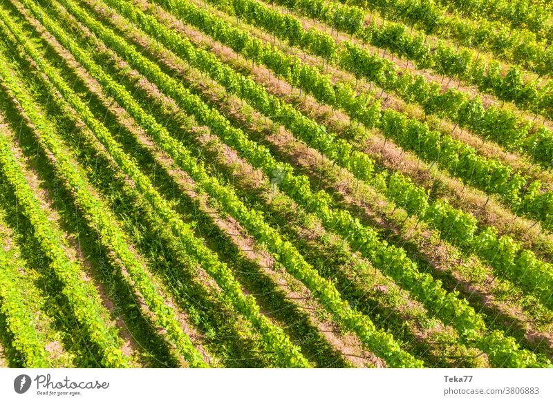 sunny vineyards from above whine vine yard whine plants grape plants grapes shadow farm farming winemaker wineyard alcohol beverage