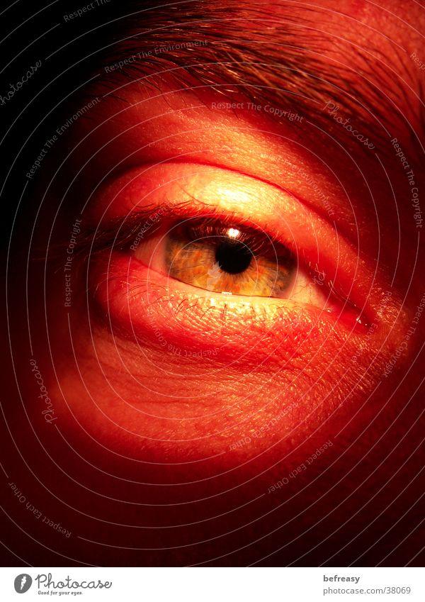 Man Eyes Eyelash Eyebrow Iris