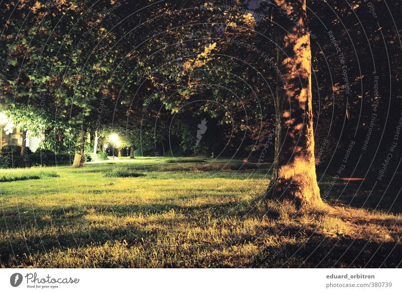 Nightdivers Environment Nature Tree Grass Bremen Dark Loneliness Street lighting Shadow play Colour photo Subdued colour Exterior shot Deserted Artificial light