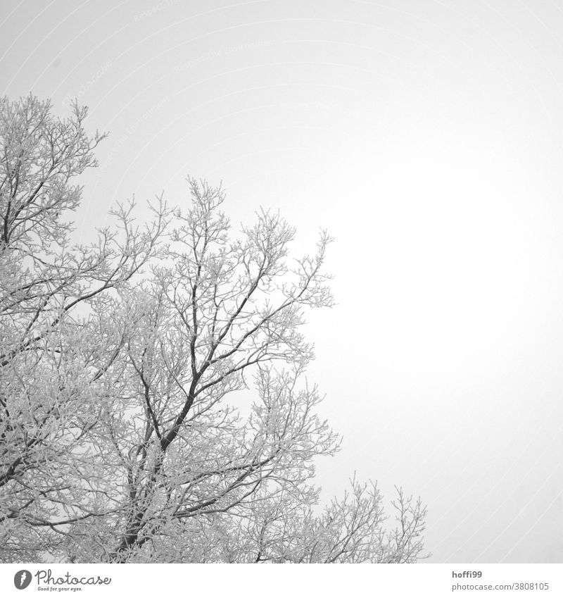 Hoarfrost on branches of a tree Snow crystal Twig Freeze Ice crystal Branch Frozen White Cold Winter ice and snow Frost Hoar frost Plant Fog Bad weather Wet