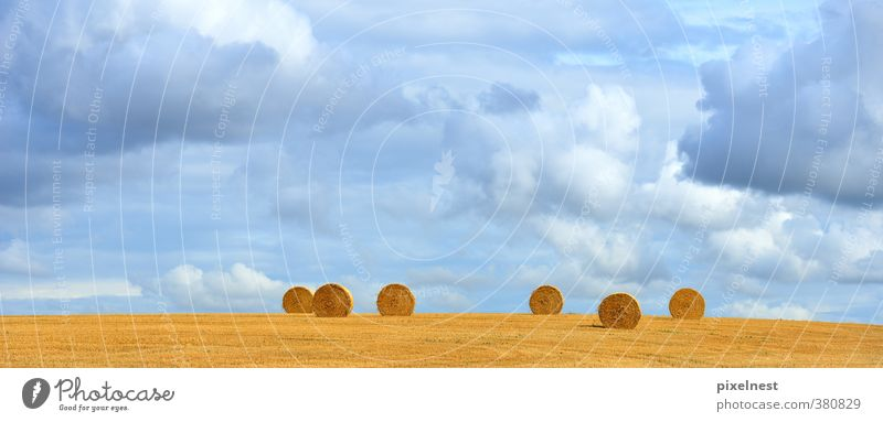 straw bale Grain Summer Agriculture Forestry Nature Landscape Plant Clouds Autumn Warmth Field Round Blue Yellow Straw Bale of straw Coil Roll of straw Hay