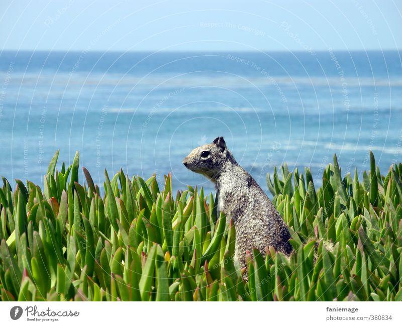 Nature Blue Green Ocean Environment Coast Gray Horizon Wild animal Tourism Stand Trip Listening Serene Watchfulness American Flag