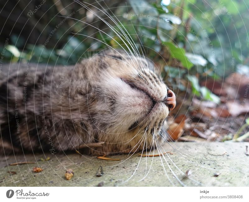 Chin of a lying cat Colour photo Close-up Worm's-eye view Cat Animal Pet Whiskers out Lie unusual autumn Snout Under on the ground Animal portrait Day Deserted