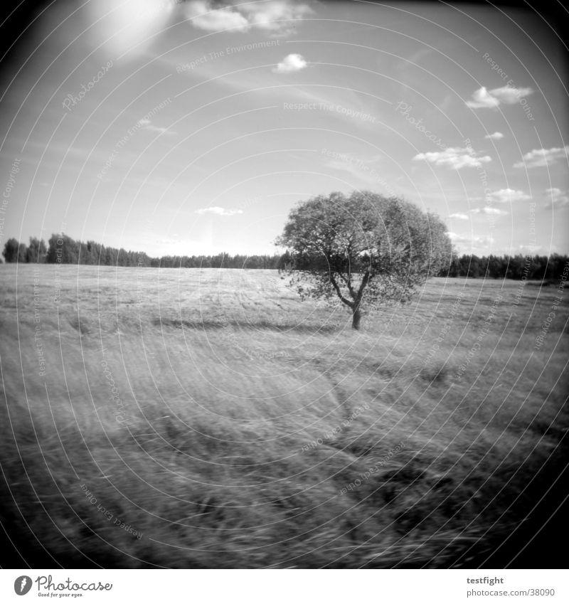 Nature White Tree Black Landscape Americas Holga Portugal