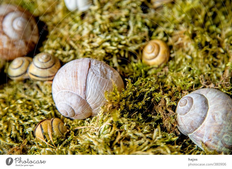 snail shell Calm Meditation Decoration Nature Moss Animal Wild animal Simple Gray Snail shell Crumpet snails Spiral amass Collection silent Still Life Fragile
