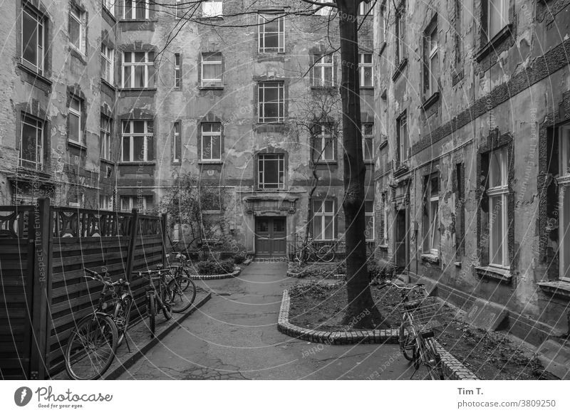 Backyard Berlin b/w Old building Tree Wheel Bicycle black/white Black & white photo B/W Window Architecture Town House (Residential Structure) Gray city