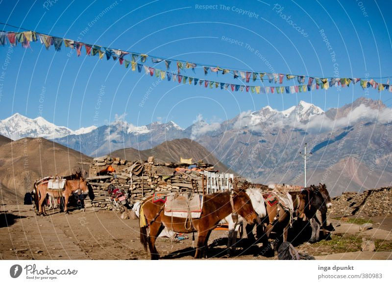 workhorses Environment Nature Landscape Sky Cloudless sky Sun Climate Beautiful weather Rock Mountain Peak Snowcapped peak Nepal Himalayas High mountain region