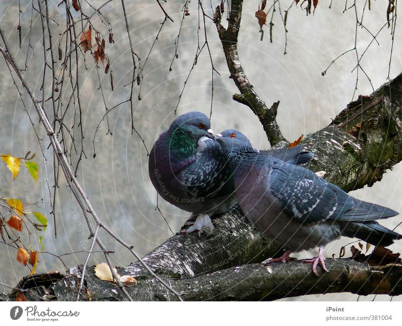 Blue Beautiful White Animal Black Emotions Gray Moody Bird Together Pink Pair of animals Authentic Communicate To enjoy Wing