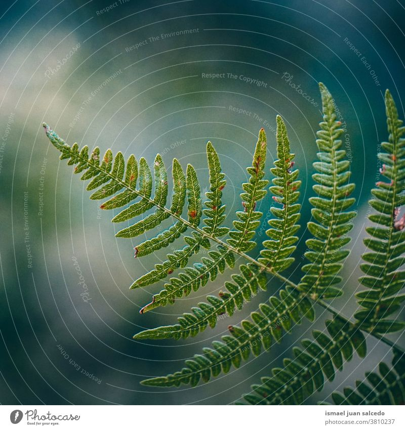 green fern leaf in the nature in autumn season, green background plant sunlight bright abstract texture garden floral decorative outdoors fragility natural fall