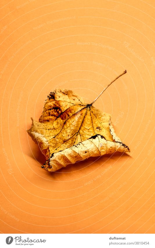 Autumn leaves on an orange background foliage withered Orange Flat Lie fall Autumnal Autumnal colours Dry dried leaf Nature Leaf Colour photo Plant Early fall
