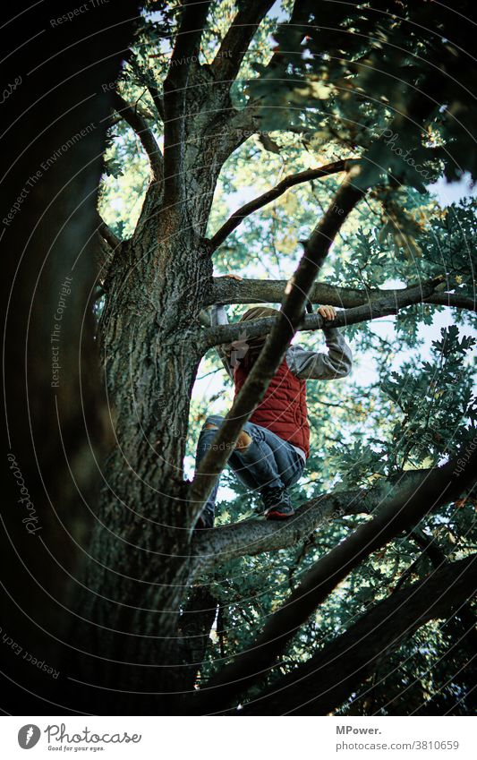 up in the tree top Tree Child Climbing Playing Infancy Romp Nature out Treetop branches Girl Joy Happiness Brave Fear of heights Movement Human being