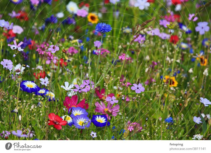 Colourful flower meadow in the basic colour green with various wild flowers. Leaf Flower Flower field Flower meadow Meadow little flowers Blossom Botany flora