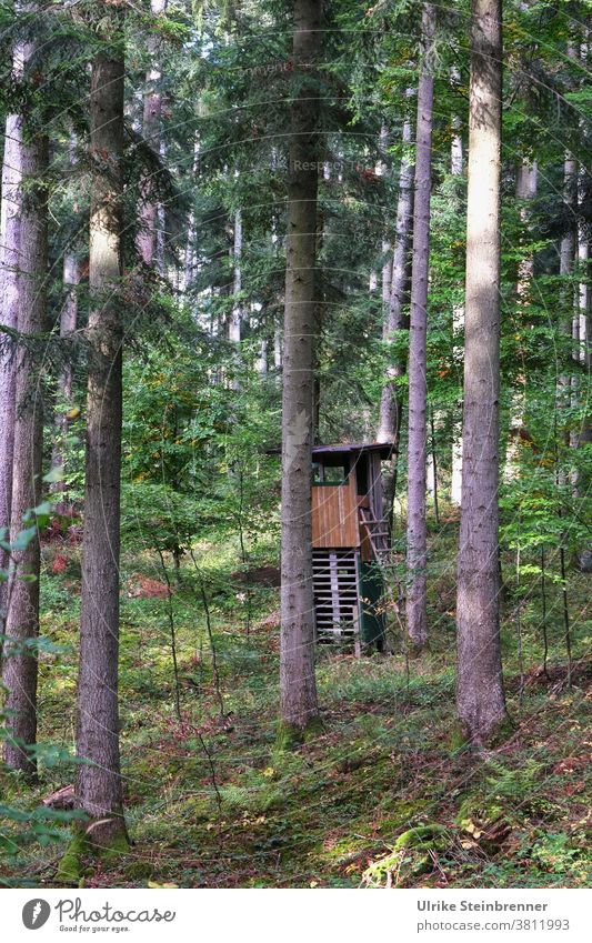 High seat of the hunter in the forest Hunting Blind hunter's seat hide high level hunting equipment hunting seat Wooden hut trees firs Forest Cover covert