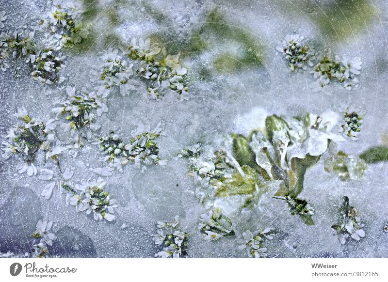 The blossoms have been caught cold Winter winter icily Ice Snow Frozen flowers Green beginning of spring onset of winter beginning of winter frozen Frostwork
