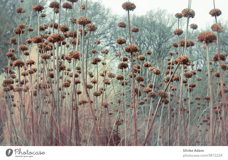 Garden in winter Autumn Faded Winter Light Stalk Grief mourning card Transience transient flora Nature naturally