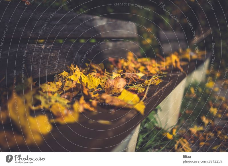 A bench covered with leaves in the park Bench Park foliage leafy Autumn Autumn leaves Autumnal colours Day Nature