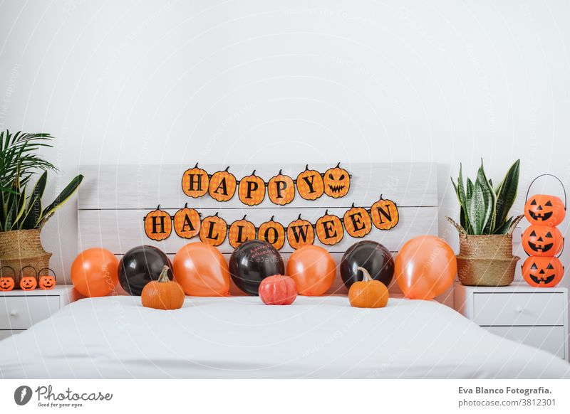 bedroom halloween decoration with pumpkins, balloons and garland, nobody. halloween concept home holiday orange plants background season celebration window