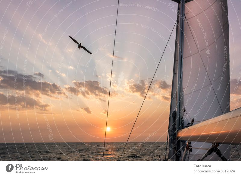 The sun rises on the horizon, a seagull flies by as we sail Twilight Sunrise Horizon Sunbeam sailing yacht Front Sail Ocean Water Seagull Bird Flying Sailing