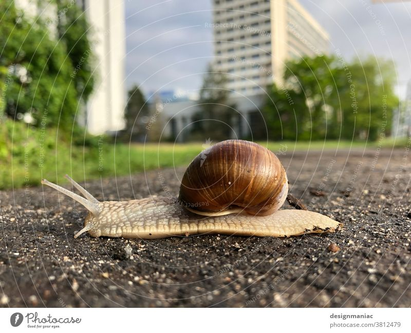 Little snail, big on the road in Frankfurt :-) Crumpet High-rise Worm's-eye view Architecture Main Bank building Exterior shot Sky Pavement