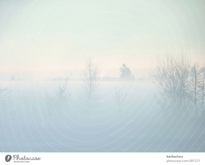 Sky Nature Tree Loneliness Landscape Calm Winter Far-off places Cold Environment Snow Lake Bright Moody Dream Air
