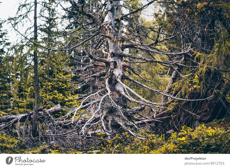 Dead tree above the Achensee in Tirol in Austria Alps Back-light Tyrol Lake Achensee Wanderlust Hiking trip Class outing nature conservation Endurance