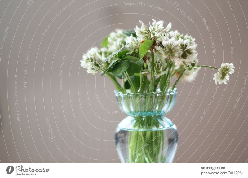 Beautiful Green Plant Flower Blossom Brown Birthday Bouquet Vase Foliage plant Minimalistic