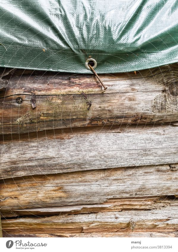 When a crooked nail should take all the burden and burden of protecting firewood. Stack of wood protective tarpaulin Eyelet nailed on Nailed Attach Tree trunk