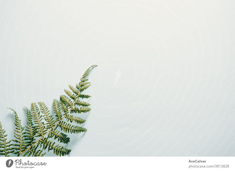 Fern leaf over a white background lay day wedding empty floral petal branch minimalism plant greeting romantic flowers pattern blossom symbol natural love