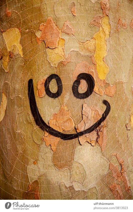 Smiley face sprayed on tree trunk Tree Tree bark Tree trunk Nature Autumn Environment Brown Yellow Black Wood Exterior shot Detail
