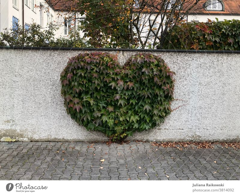 heart-shaped bush Heart (symbol) Love Valentine's Day Romance Deserted Emotions Mother's Day Sign Infatuation Colour photo Exterior shot Wall (barrier) Nature
