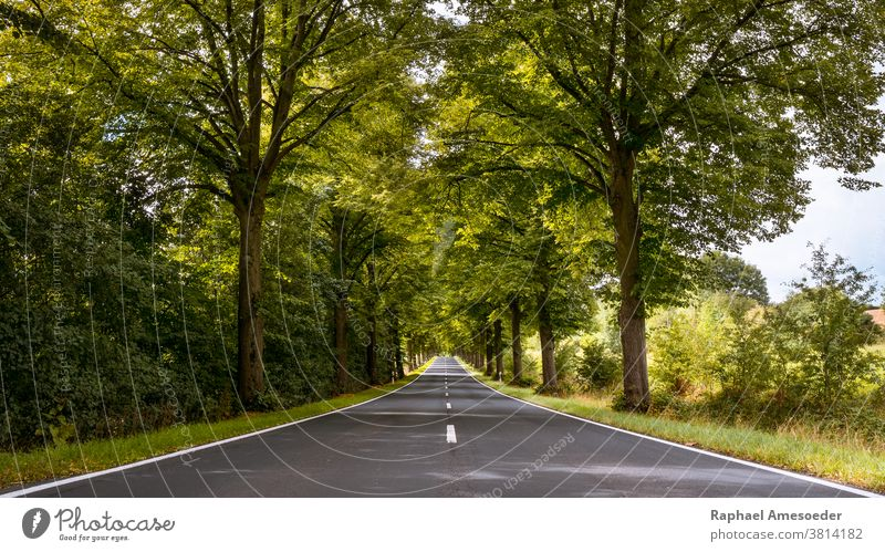 Tree-lined avenue through Thuringia on summer day alameda alley arbored asphalt beautiful blue bush canopy environment europe foliage grass green landscape lane