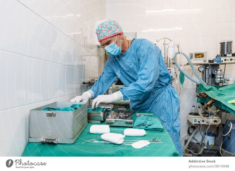 Veterinarian surgeon preparing tools for surgery before operation on a dog veterinarian mask equipment clinic doctor hospital pet operating room sterile theater