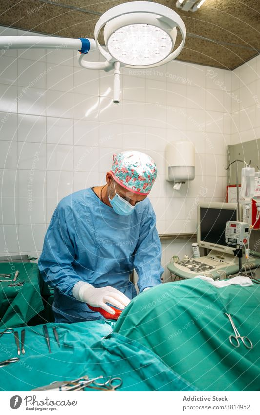 Veterinary surgeon performing a surgical procedure on a dog veterinarian pet surgery operation clinic hospital mask veterinary animal patient pets instruments