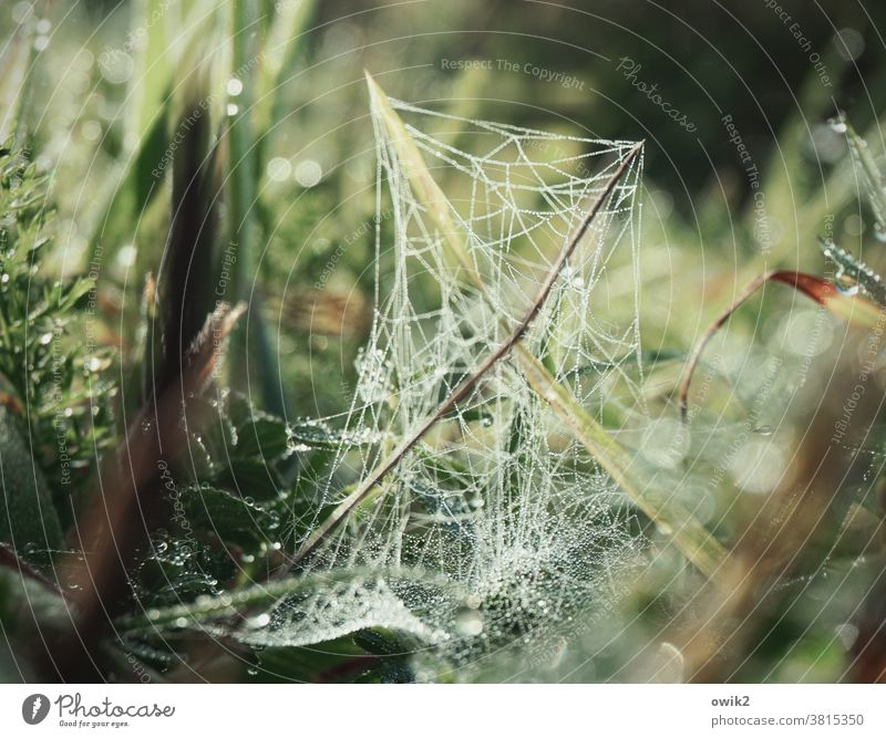 Morning Network spinning threads Life Foliage plant naturally Worm's-eye view blades of grass Growth Near Wild plant Fresh Idyll Early morning dew sparkle
