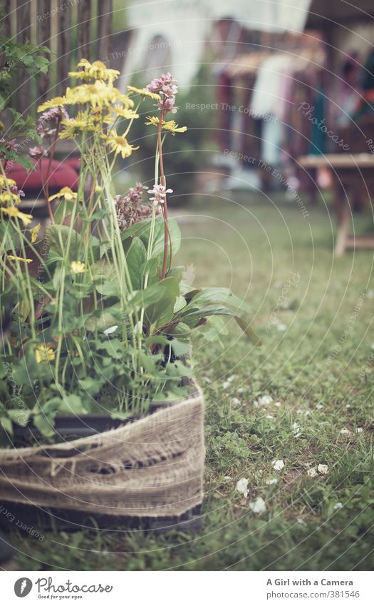 kick me about a bit Nature Plant Spring Flower Blossom Pot plant Garden Park Blossoming Growth Friendliness Yellow Untidy Sack Edge Subdued colour Exterior shot
