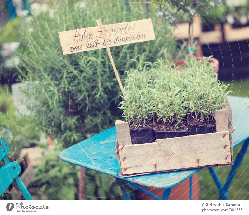 ..... and in demand Nature Plant Spring Agricultural crop Wild plant Lavender Herbs and spices Garden Growth Fresh Healthy Presentation Retro Offer Markets