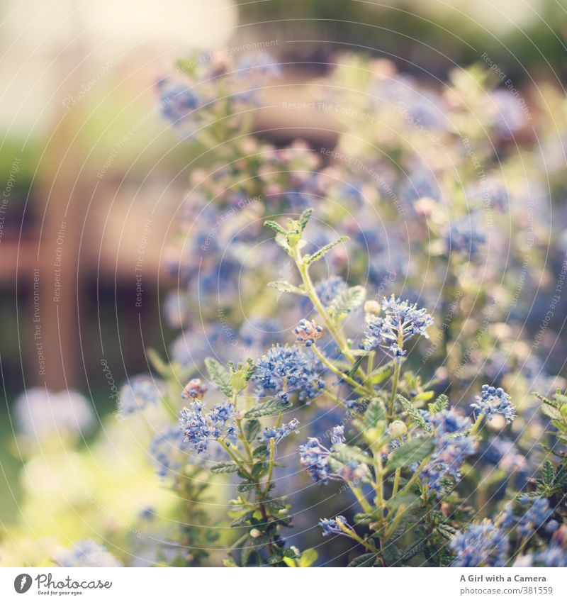 strange color blue Nature Plant Spring Beautiful weather Flower Blossom Pot plant Garden Blossoming Growth Happiness Fresh Blue Exterior shot Detail Deserted